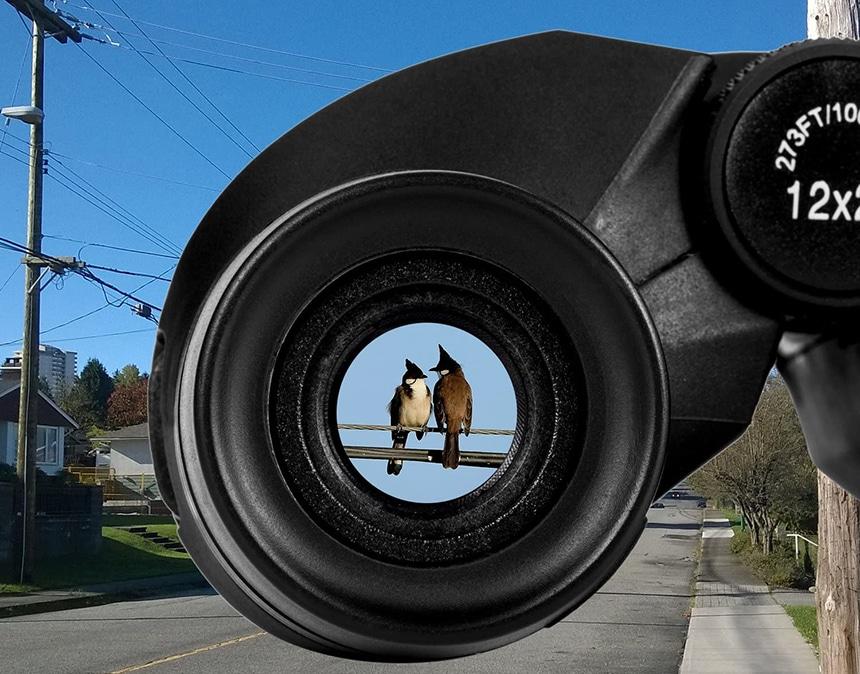 15 Best Compact Binoculars - When The Binoculars Aren't Bulky