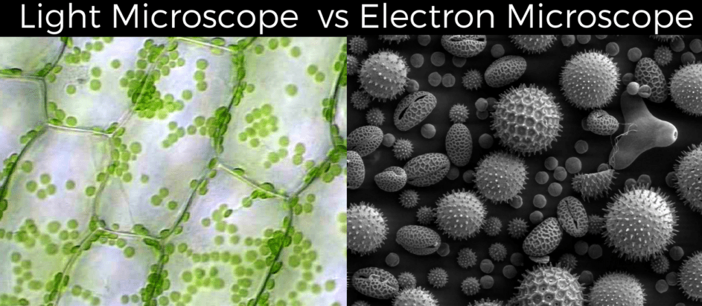 Light Microscope vs Electron Microscope: Which Can Show More?