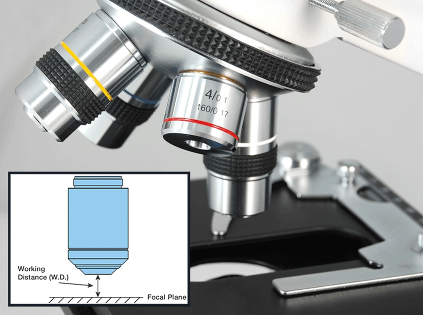 Compound vs Stereo Microscope: Are They That Different?